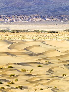 Sand dunes, Mojave Desert, Death Valley National Park, California