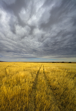 Cumulus clouds, and tire tracks on the grassland, Hart Plateau, Hart Mountain National Wildlife Refuge, Oregon