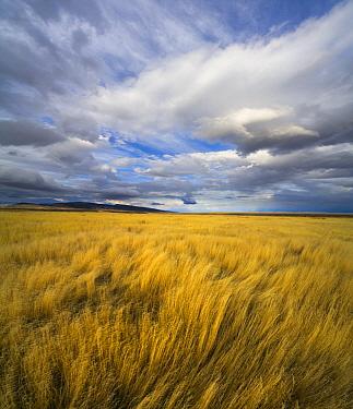 Cumulus clouds and grassland, Hart Plateau, Hart Mountain National Wildlife Refuge, Oregon