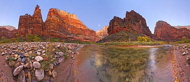 Cottonwood (Populus sp) trees and the Virgin River with moon, 360 view, Zion Canyon, Zion National Park, Utah