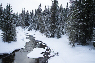 River in winter, Yellowstone National Park, Wyoming