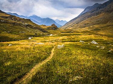 Path running through Ubaye Valley, Vallon du Longet, Alpes de Haute Provence, France
