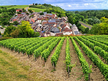Village and vineyard for production of Louilly fume wine, Les Loges, Loire Valley, France