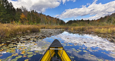 Canoe crossing pond with lily pads in autumn, Vermont