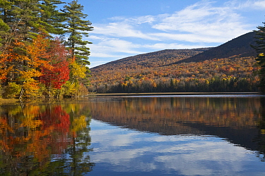 Deciduous forest and pond in autumn, Lefferts Pond, Vermont