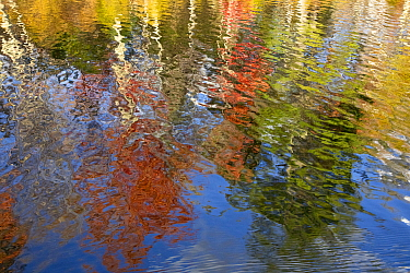 Deciduous forest reflected in pond in autumn, Lefferts Pond, Vermont