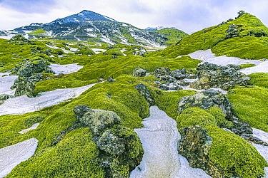 Moss-covered rocks and snow, Vik, Iceland