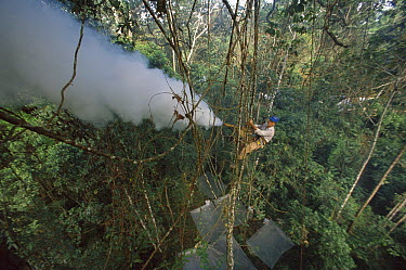 Smithsonian researcher Terry Erwin fogging trees with insecticide to collect insects from lowland rainforest canopy, Peru  -  Mark Moffett