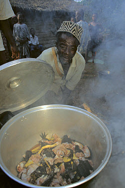 Goliath Frog (Conraua goliath) being cooked for eating by villagers, Cameroon  -  Mark Moffett