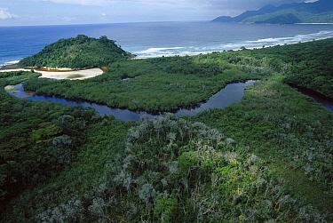 Showing the coastal forest of Ilha Grande Island, Atlantic Forest ecosystem, Brazil  -  Mark Moffett
