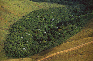 Patch of remnant rainforest surrounded by clearcut, Belo Horizonte, Atlantic Forest ecosystem, Brazil  -  Mark Moffett