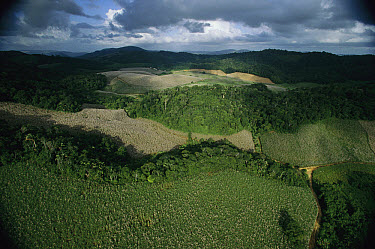 The Serra Grande Sugar Company preserves rainforest on more than one-third of its 60,000 acres in order to protect a watershed, Alagoa, south Brazil  -  Mark Moffett