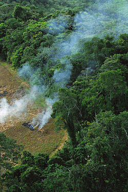 A farmer burns his agricultural field after harvesting the crop in a clearcut area in the forest, Usina Serra Grande, Atlantic Forest, Brazil  -  Mark Moffett