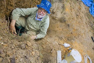 Bulldog Ant (Myrmecia gulosa) nest excavated by Robert Taylor, eastern Australia  -  Mark Moffett