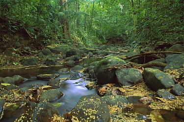 Small creek running through tropical rainforest in the middle of the island, Barro Colorado Island, Panama  -  Christian Ziegler