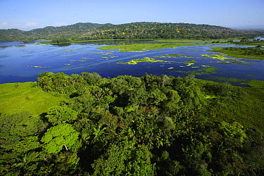 Aerial view of the Canal Zone, Chagres River which feeds Lake Gatun, in Soberania National Park, Panama  -  Christian Ziegler