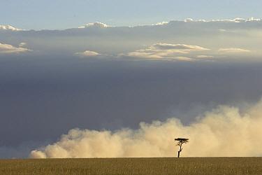 A controlled fire burns through the savannah at sunset, Masai Mara National Reserve, Kenya  -  Suzi Eszterhas