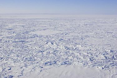 Polar Bear (Ursus maritimus) denning habitat of the Western Hudson Bay population, vulnerable, Wapusk National Park, Manitoba, Canada  -  Suzi Eszterhas