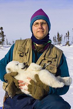 Polar Bear (Ursus maritimus) researcher Nick Lunn holds a tranquilized three to four month old cub during examination, vulnerable, Wapusk National Park, Manitoba, Canada  -  Suzi Eszterhas
