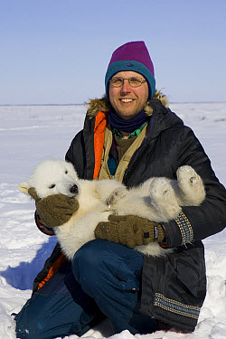 Polar Bear (Ursus maritimus) reseacher Nick Lunn holds tranquilized three to four month old cub during examination, vulnerable, Wapusk National Park, Manitoba, Canada  -  Suzi Eszterhas