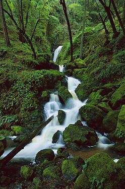 Falls on Cataract Creek after a winter storm, Mount Tamalpais State Park, California  -  Suzi Eszterhas