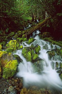 Waterfall off of Power Creek, Cordova, Alaska  -  Suzi Eszterhas