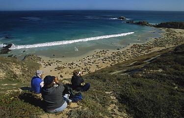 California Sea Lion (Zalophus californianus) researchers studying sea lions, Channel Islands National Park, San Miguel, California  -  Suzi Eszterhas