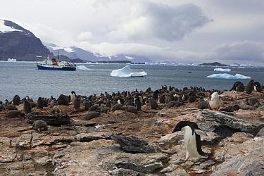 Adelie Penguin (Pygoscelis adeliae) colony with cruise ship in background, Shingle Cove, Coronation Island, South Orkney Islands  -  Suzi Eszterhas