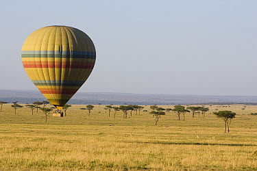 Hot air balloon over savanna, Masai Mara Triangle, Kenya  -  Suzi Eszterhas