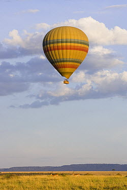 Hot air balloon flying over savanna, Masai Mara Triangle, Kenya  -  Suzi Eszterhas
