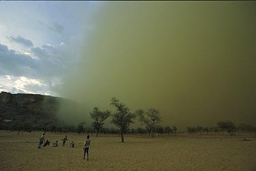 Dogon natives watch approaching sandstorm, Mali, west Africa  -  Ingo Arndt