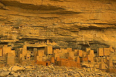 Dogon village built into the sandstone cliffs of Bandiagara, Mali, West Africa  -  Ingo Arndt