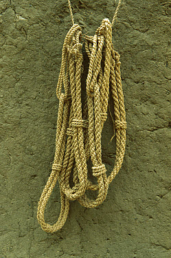 Baobab (Adansonia digitata) bark, made into rope, Sahel Desert, Mali, west Africa  -  Ingo Arndt