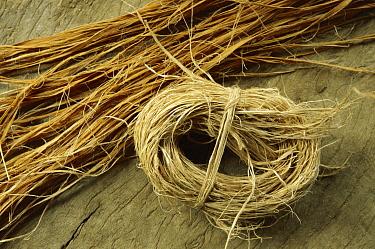 Baobab (Adansonia digitata) bark, used to make rope, Sahel Desert, Mali, west Africa  -  Ingo Arndt