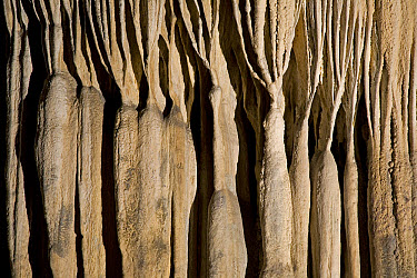 Stalactites in cave, Cacahuamilpa Caverns, Grutas de Cacahuamilpa National Park, Guerrero, Mexico  -  Ingo Arndt