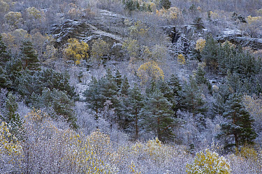 Autumn colors with first snow, Dovrefjell National Park, Norway  -  Ingo Arndt