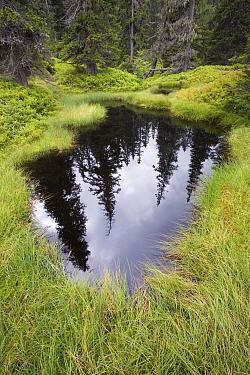 Old growth forest and pond, Austria  -  Ingo Arndt