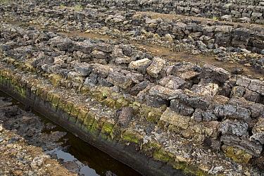 Harvesting peat from a peat bog, Europe  -  Ingo Arndt