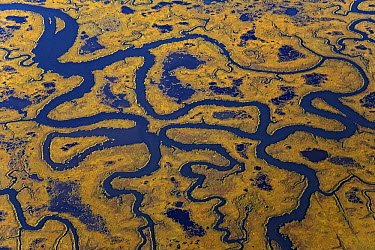 Aerial view of Cape May Peninsula showing rivers and tributaries flowing through salt marsh, New Jersey  -  Ingo Arndt