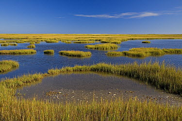 Salt marsh landscape, Cape May Peninsula, New Jersey  -  Ingo Arndt