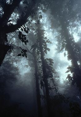 Cloud forest, misty canopy, Venezuela  -  Stephen Dalton
