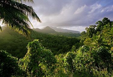 Rainforest and hills, Dominica, Windward Islands, Lesser Antilles, Caribbean  -  Stephen Dalton