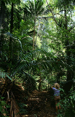 Rainforest and person studying it, Central Forest Reserve National Park, Tobago, West Indies  -  Stephen Dalton