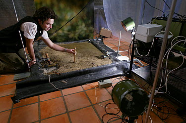 Studio set up for photographing jumping Mudskippers using high speed flash  -  Stephen Dalton