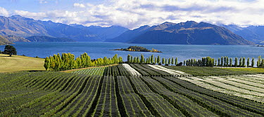 Rippon vineyard, Otago, South Island, New Zealand  -  Stephen Dalton