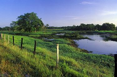 Seasonally flooded lowlands of a cattle ranch, Venzuela  -  Albert Lleal