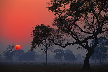 Sunrise over open park landscape with trees, Transpantaneira, Pantanal, Brazil  -  Theo Allofs