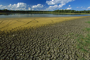 Drought patterns after rainy season on shore of brakish lake, southern Pantanal, Brazil  -  Theo Allofs