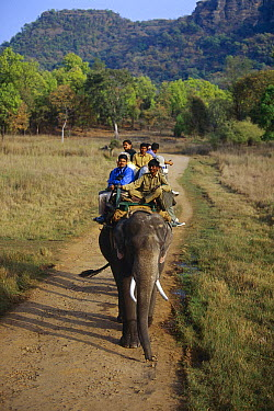 Asian Elephant (Elephas maximus) transporting tourists, Bandhagarh National Park, India  -  Theo Allofs