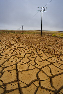 Mud cracks after unusual winter rains rains and subsequent drought, near Aub, Diamanten Sperrgebiet, Namib Desert, Namibia  -  Theo Allofs